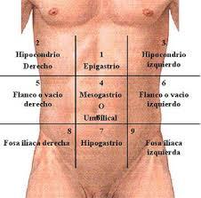 regiones abdominales
